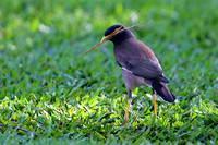 9Fi Common MynaH