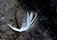 Feather3_934